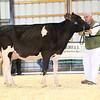EOWQ18-Holstein-7494