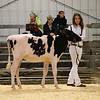 EOWQ18-Holstein-6586