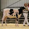 EOWQ18-Holstein-6588