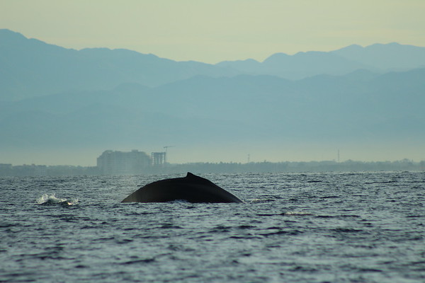FEBRUARY 13, 2018 WHALE PHOTO SAFARI