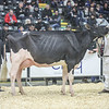 QuebecSpring18_Holstein-2036