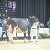 QuebecSpring18_Holstein-2035