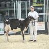 QuebecSpring18_Holstein-0075