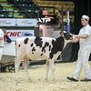 QuebecSpring18_Holstein-0068