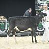 QuebecSpring18_Holstein-0083