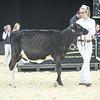 QuebecSpring18_Holstein-0082