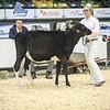 QuebecSpring18_Holstein-0072