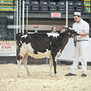 QuebecSpring18_Holstein-0077