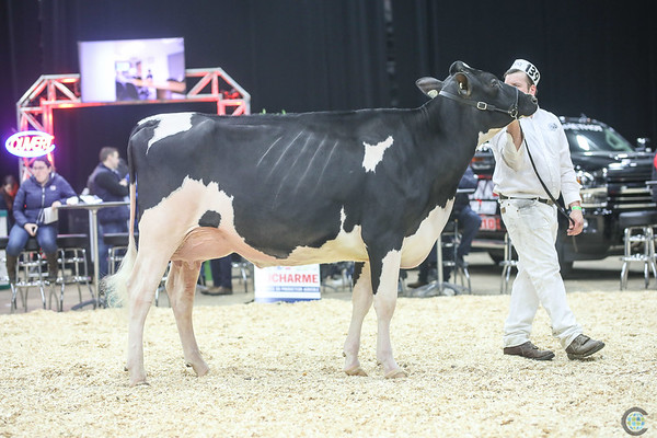QuebecSpring18_Holstein-1414