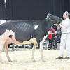 QuebecSpring18_Holstein-1417