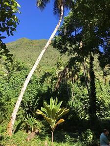 French Polynesia vegetation