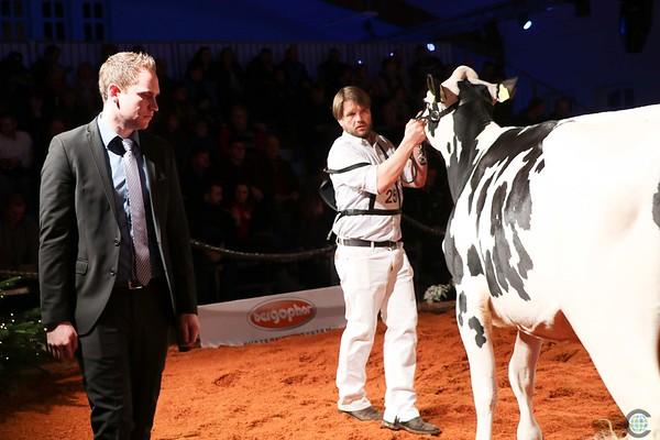 HolsteinVision18Ho-8708