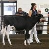 ILSF_Holstein18-2804