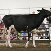 ILSF_Holstein18-3417
