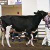 ILSF_Holstein18-3430