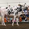 ILSF_Holstein18-3434