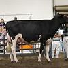 ILSF_Holstein18-3419