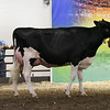ILSF_Holstein18-3422