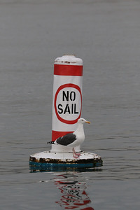 No Sail... but Flying is ok
