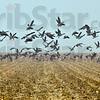 MET 010818 Geese Fog
