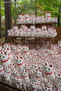 So many cats...