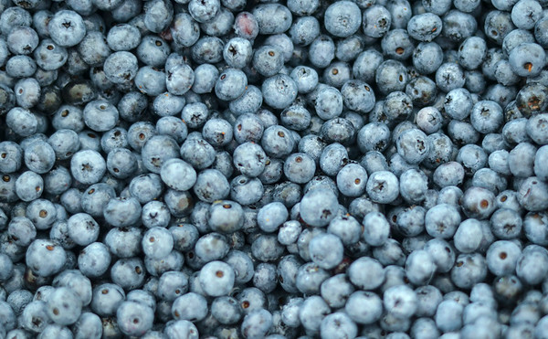 MET 071218 Fresh Blueberries