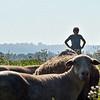 MET 070518 Royer Sheep 2