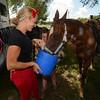 MET 070418 HORSE HEAT WATER