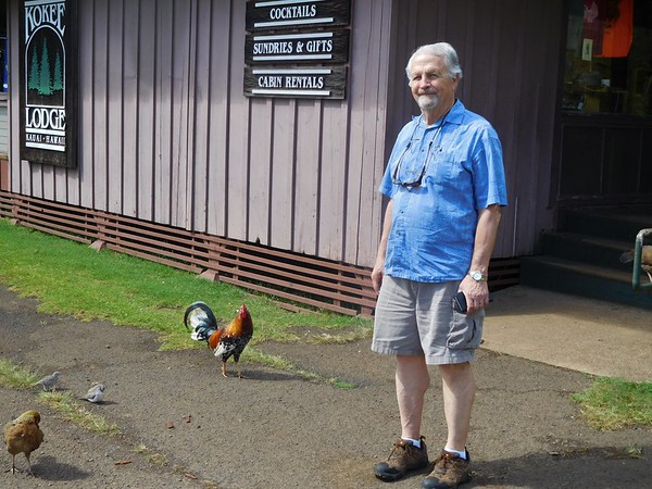 Kauai Rooster near Poipu Beach genearal area, Kauai 2018 January