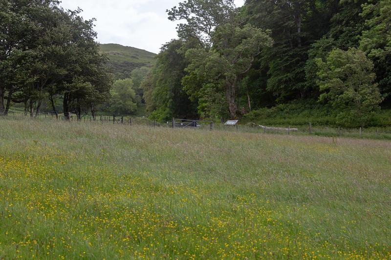 Meadow near Dunollie Castle
