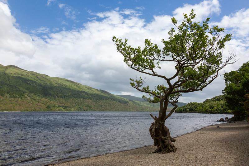 Loch Lomond, looking South