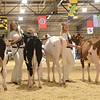 MDSF18_Holstein-5307