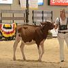 MDSF18_Holstein-5293