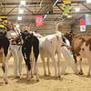 MDSF18_Holstein-5306