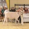 MDSF18_Holstein-5294