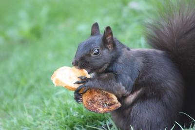 Squirrel enjoying lunch