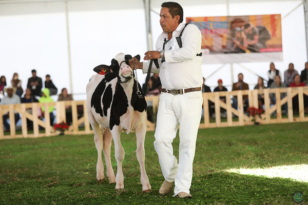 MexicoHolstein18-1M9A9914
