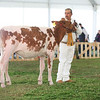 MexicoHolstein18-1M9A9926