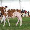 MexicoHolstein18-1M9A9912