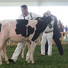 MexicoHolstein18-1M9A9918