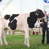 MexicoHolstein18-1M9A9942
