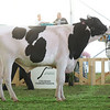 MexicoHolstein18-1M9A9944