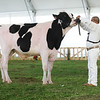 MexicoHolstein18-1M9A9937