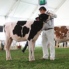 MexicoHolstein18-1M9A9920