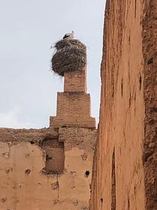 King of the Badi Palace