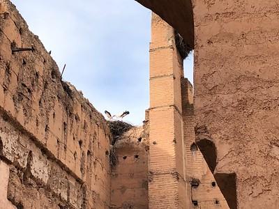 Storks in love at the Badi Palace