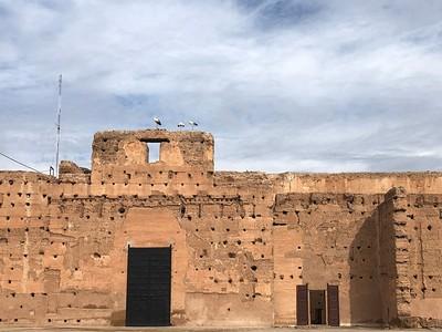 Storks at the Badi Palace