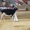 NYSpring18_Holstein-2726