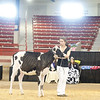 NYSpring18_Holstein-2735
