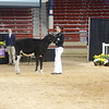 NYSpring18_Holstein-2733